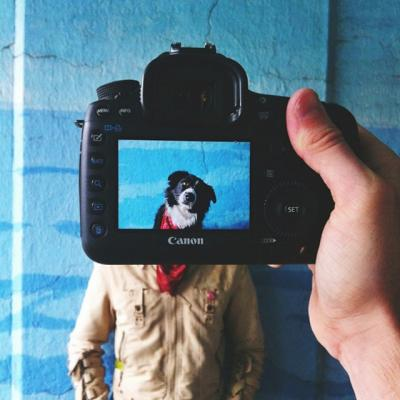 20131203232448-creative-pet-portraits-12-640x640.jpg